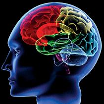 脳イメージ図